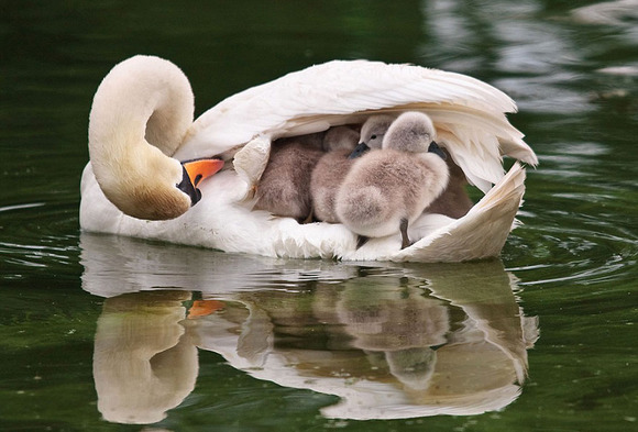 animal-parents-2