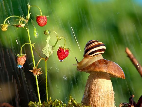macro-photography-snails-vyacheslav-mishchenko-8