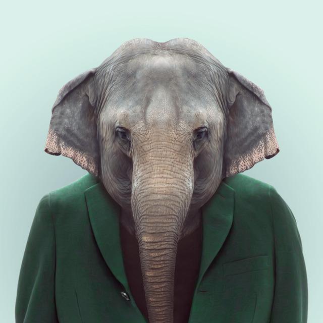 6-elephant-portrait-photography