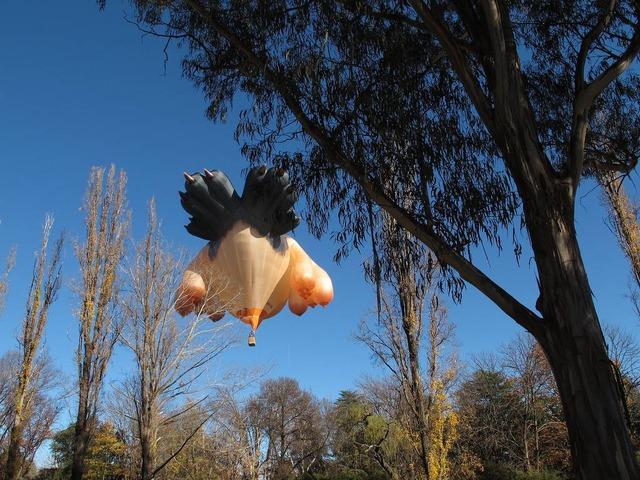 skywhale australlia canberra 5