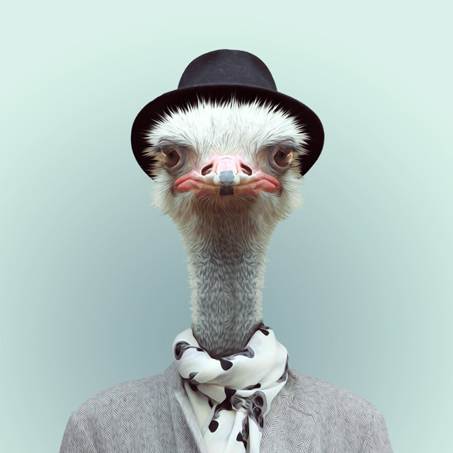 15-animal-portrait-photography