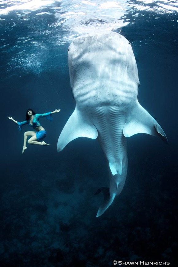 Shawn-Heinrichs-photography-underwater-11