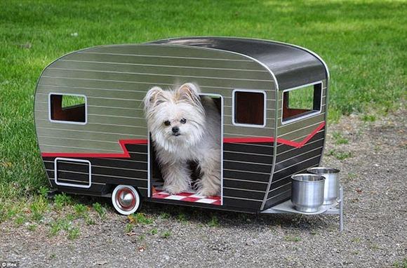 pet-camper01