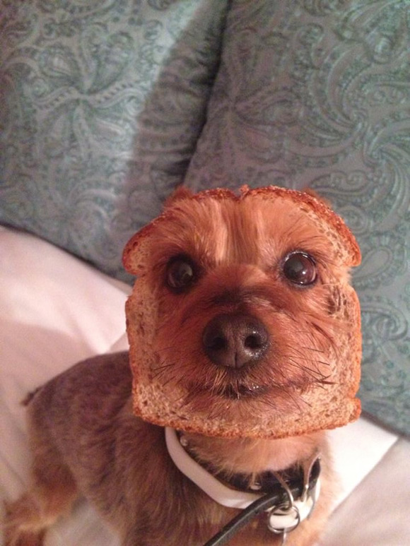 dog-bread