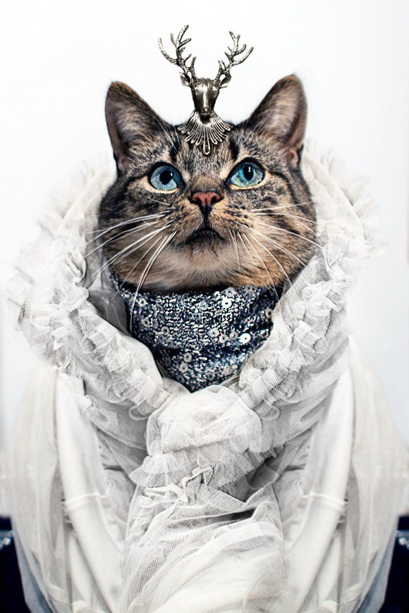 Cat-Couture-by-Jason-Mc-Groarty-6-677x1016