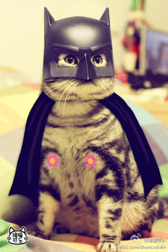 cosplay_kitty_heroes_zhumao_kele_1