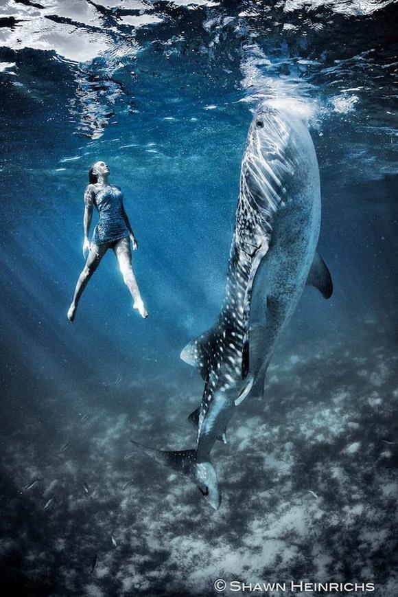 Shawn-Heinrichs-photography-underwater-5