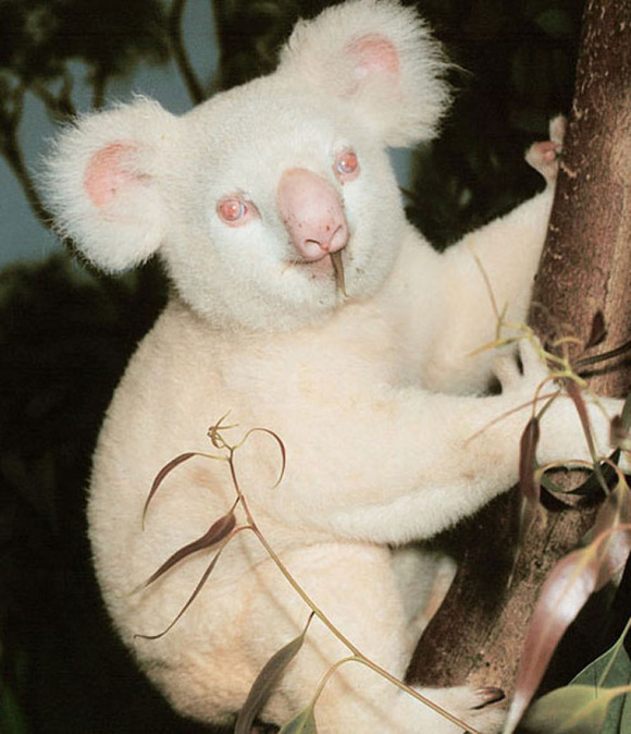albino_animals_20__880