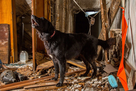 Urban Search-And-Rescue Dog