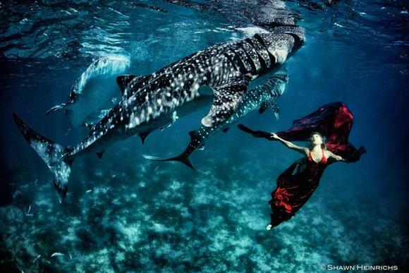 Shawn-Heinrichs-photography-underwater-10