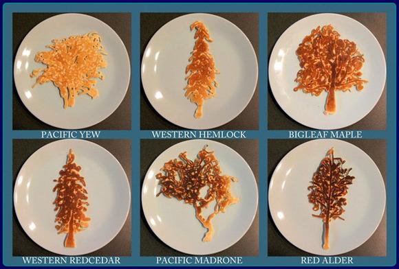 native-tress-pancakes-2