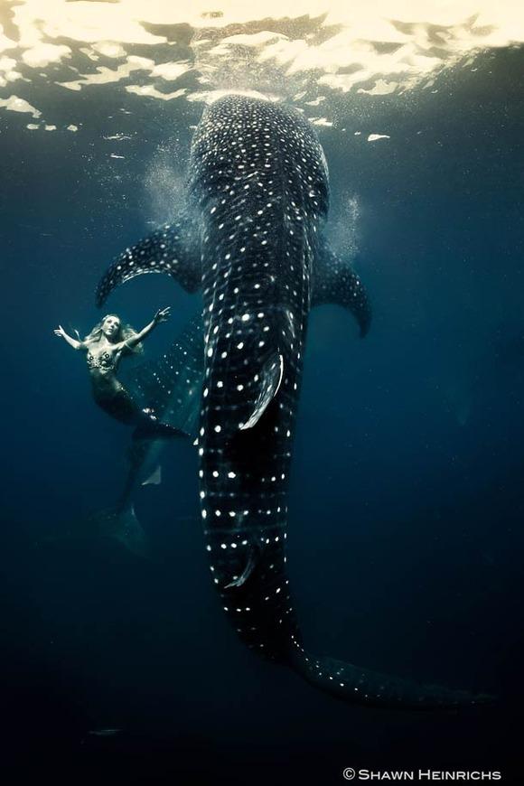 Shawn-Heinrichs-photography-underwater-8