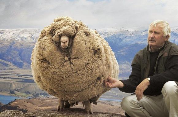 shrek-the-sheep-6[5]