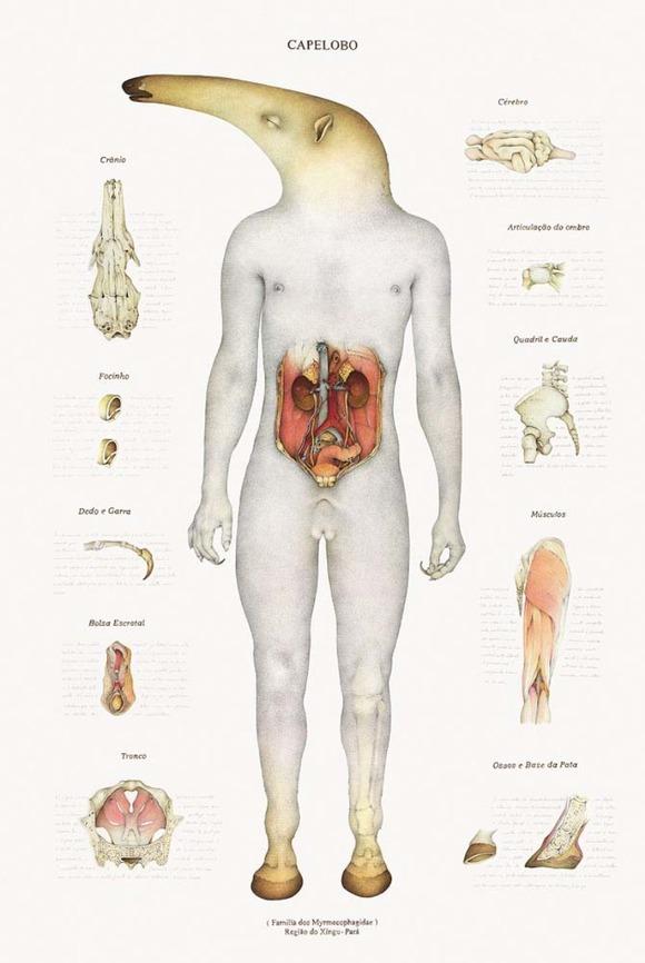 anatomymyth2