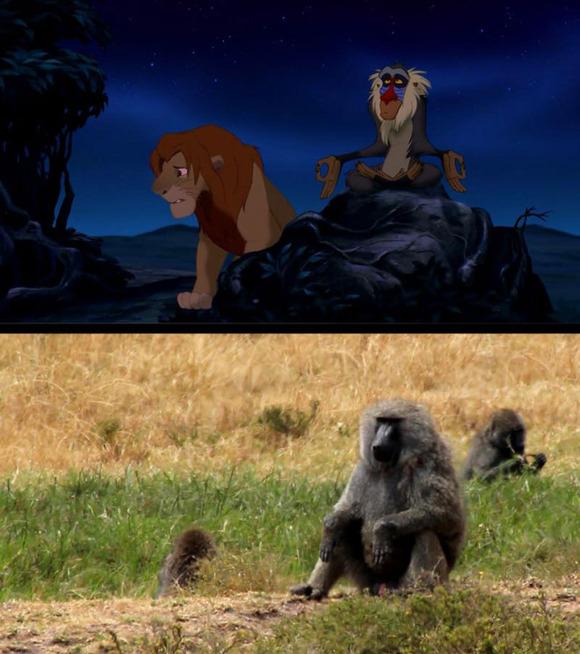 real-life-lion-king-brandon-heuser-15