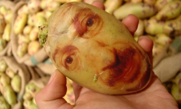 potatoportraits01