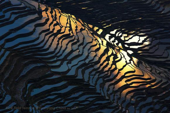 terraced-rice-fields-10__880-650x433
