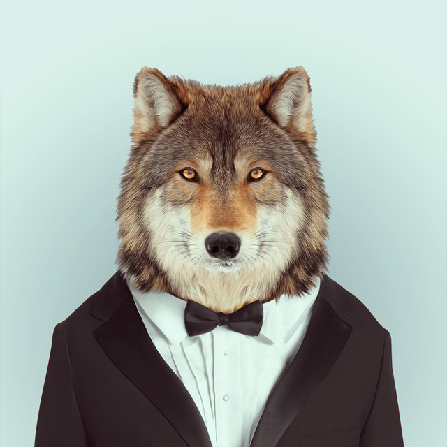 28-animal-portrait-photography
