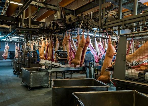 slaughterhouse-alastair-philip-wiper-11