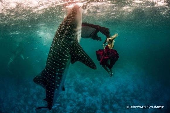 Shawn-Heinrichs-photography-underwater-2