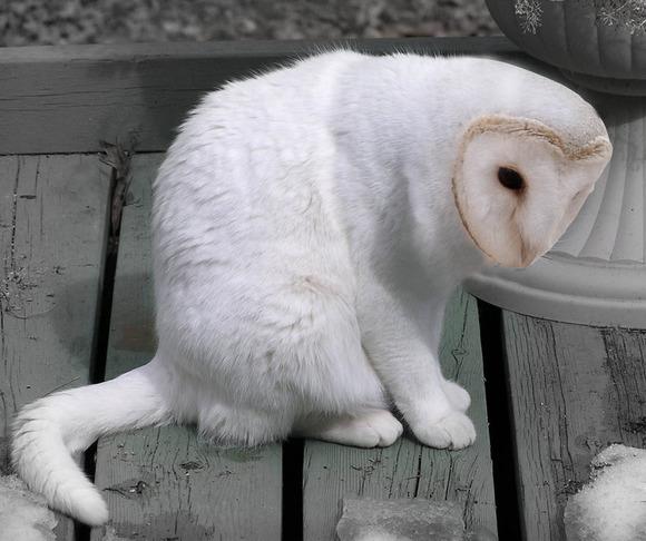 meowl3