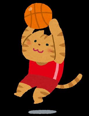basketball_cat