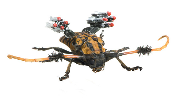 insect_army07