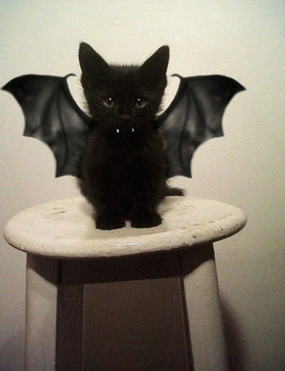 halloween-costumes-for-pets-7