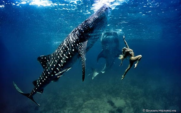 Shawn-Heinrichs-photography-underwater-15