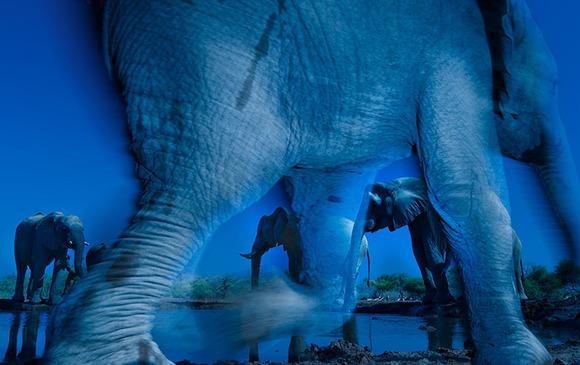 35_Greg-du-Toit-South-Africa-Essence-of-elephants