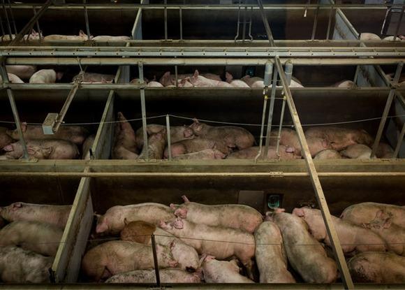 slaughterhouse-alastair-philip-wiper