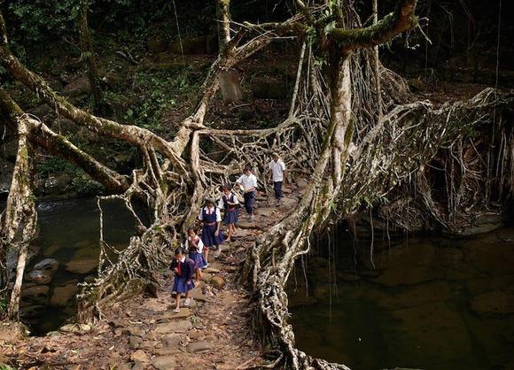 treerootbridge01