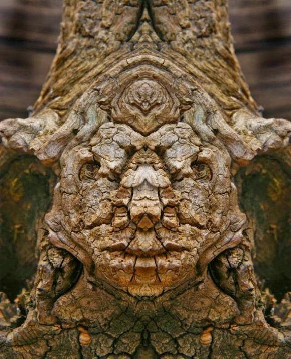 creature6