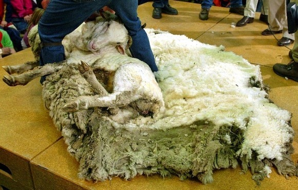 shrek-the-sheep-4[2]