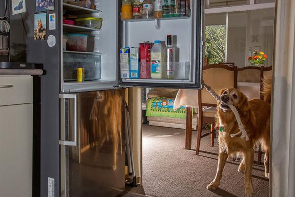 Epilepsy Assistance Dog