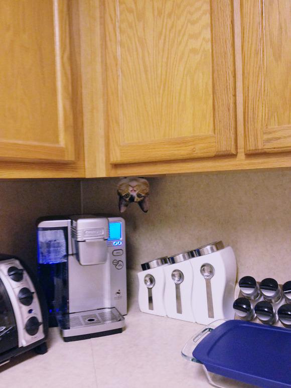 ninja-cat-hiding-funny-9__605