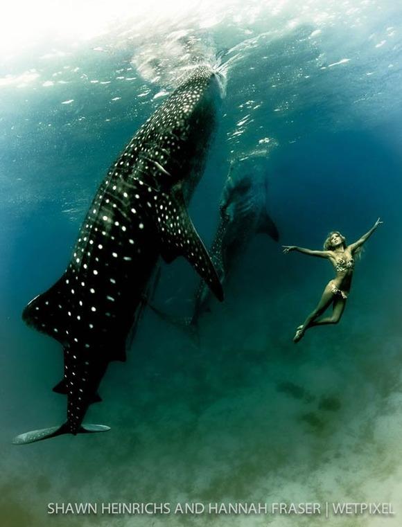 Shawn-Heinrichs-photography-underwater-6