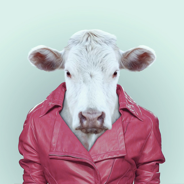 1-cow-portrait-photography