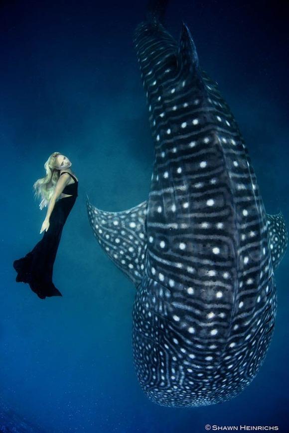 Shawn-Heinrichs-photography-underwater-7