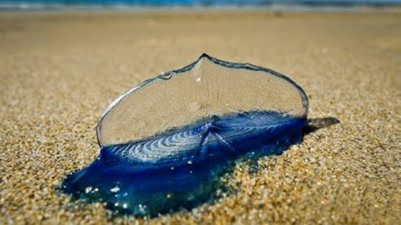 low-tide1