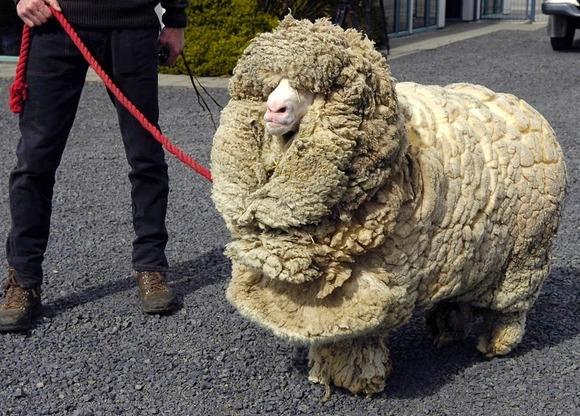 shrek-the-sheep-1[6]