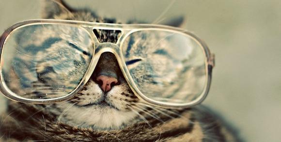 hipstercat5