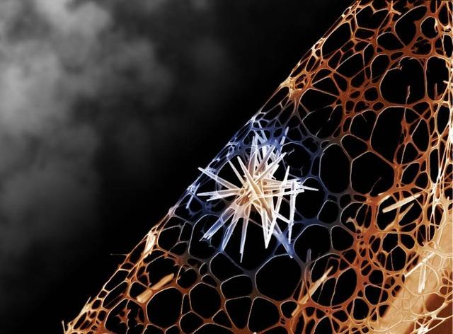 electron microscope image crystalline entity