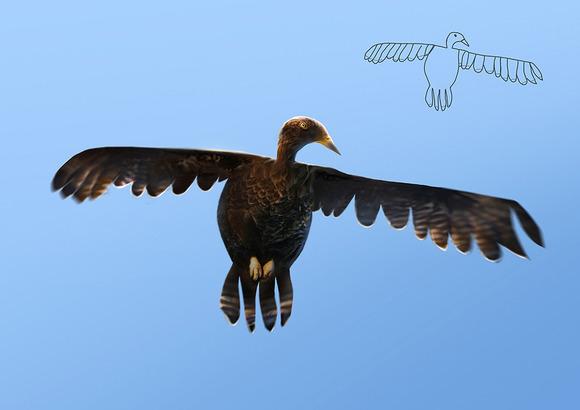 eaglesmaller
