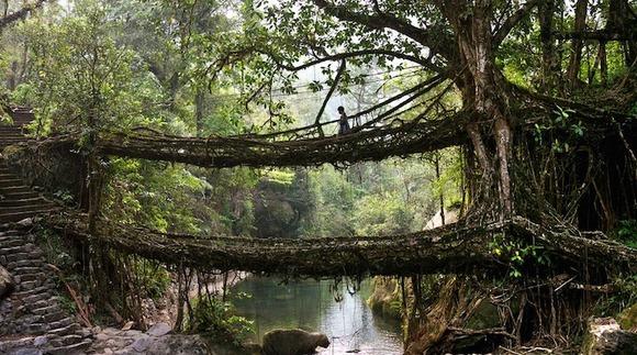 treerootbridge03