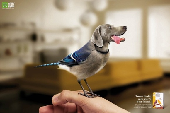 Birds-with-Dog-Heads-03-685x456