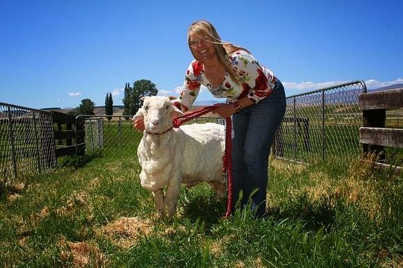 shrek-the-sheep-7[9]