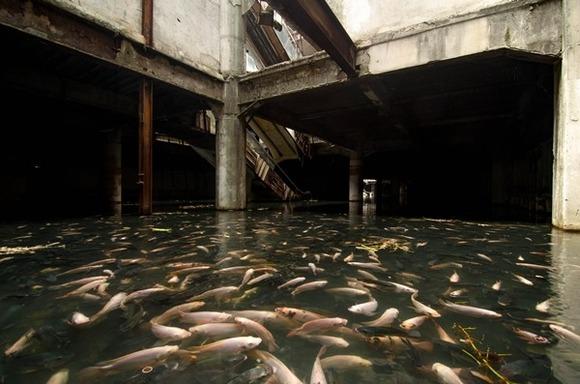abandoned-mall2
