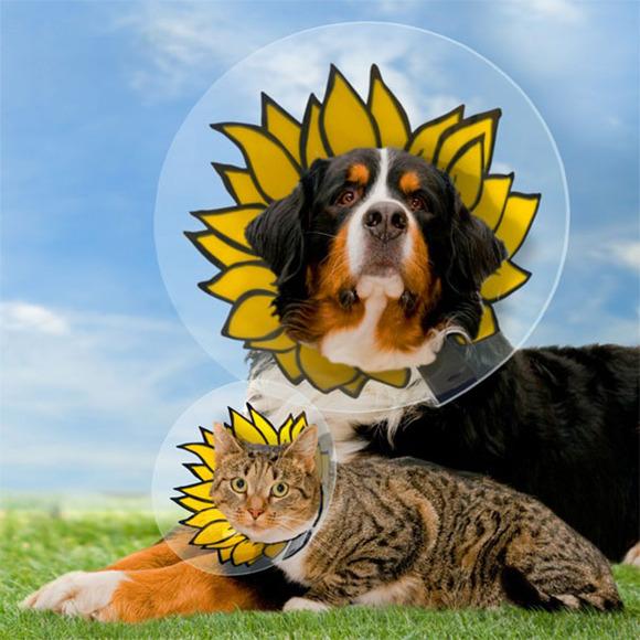 creative-pet-cones-elizabethan-collars-13__605