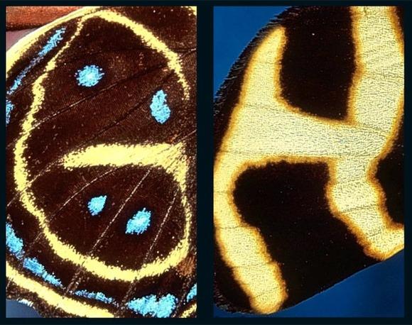 butterflyalphabet4
